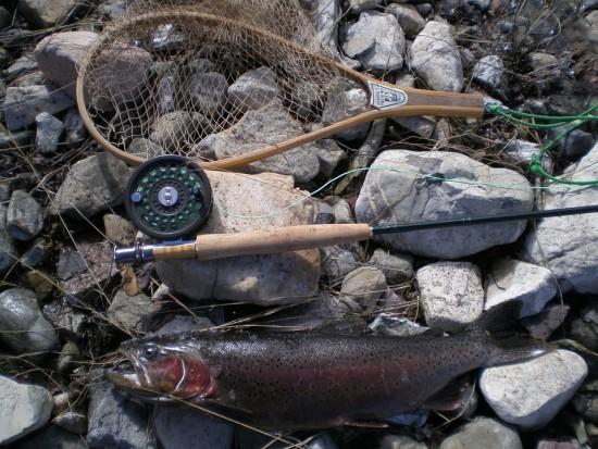 Trout Arcoíris, Pescar, Naturaleza, Canadá