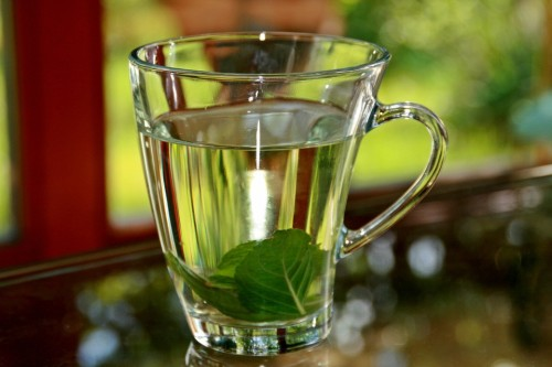Tea de Manta