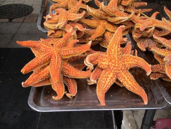 Estrellas del Mar, Kampo, Taiwan, China