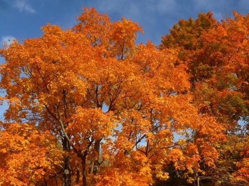 Arce, Hermosa, Canadá, Naturaleza