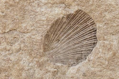 Fósil, Concha, Canadá, Naturaleza