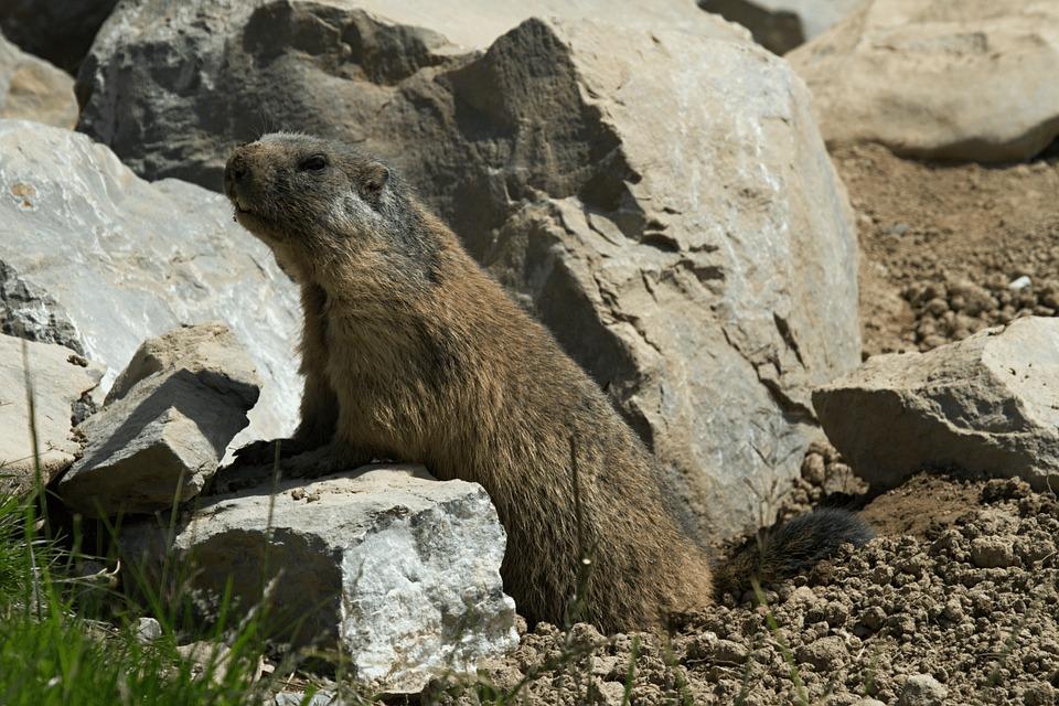 Tuza, Alberta, Canadá, Animal