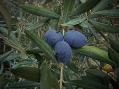 fruta de oliva
