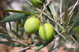fruta de olivo