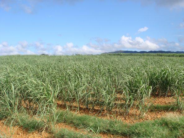 tierra de caña de azúcar